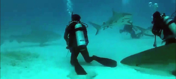 scuba diving with bullsharks